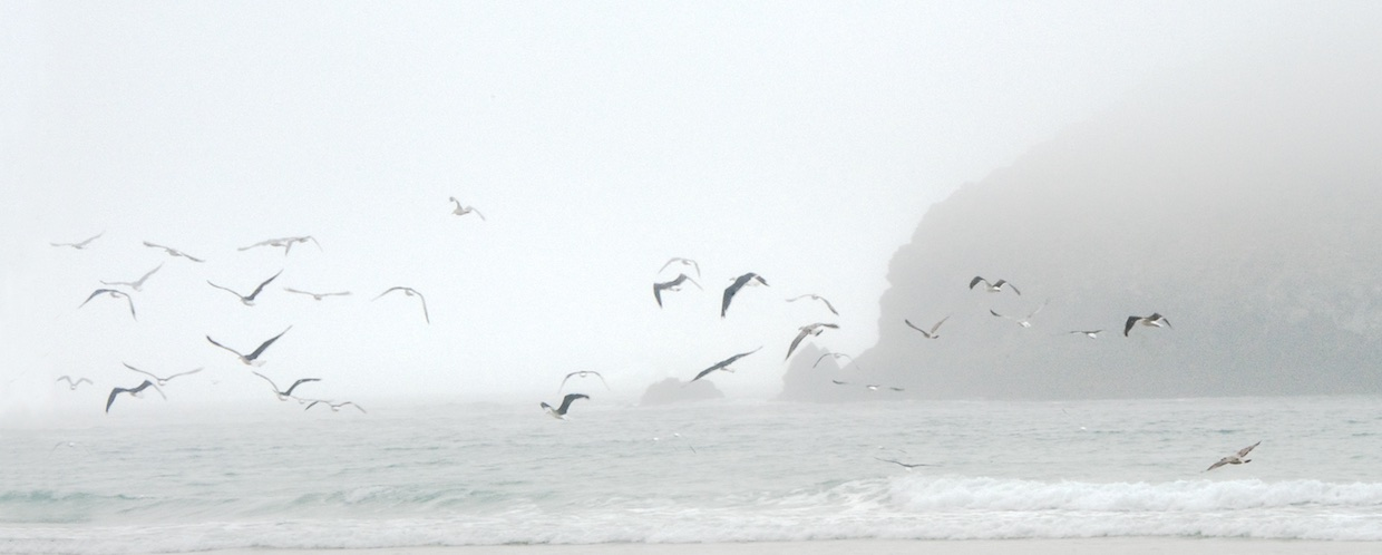 Gull Rock in the mist