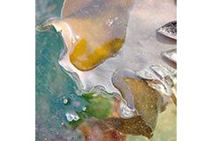 Seaweed, Rising Tide