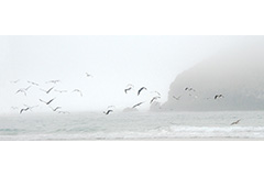 Gull Rock in the mist